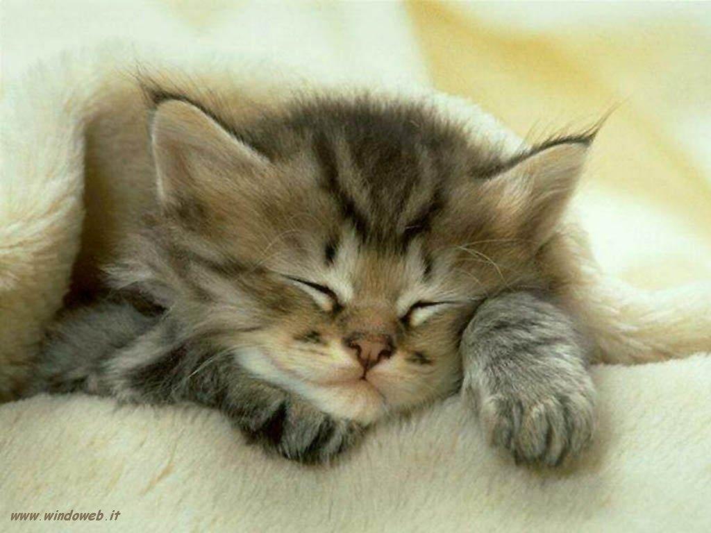 Una casa per i gatti randagi indicatore - Cucina casalinga per gatti ...
